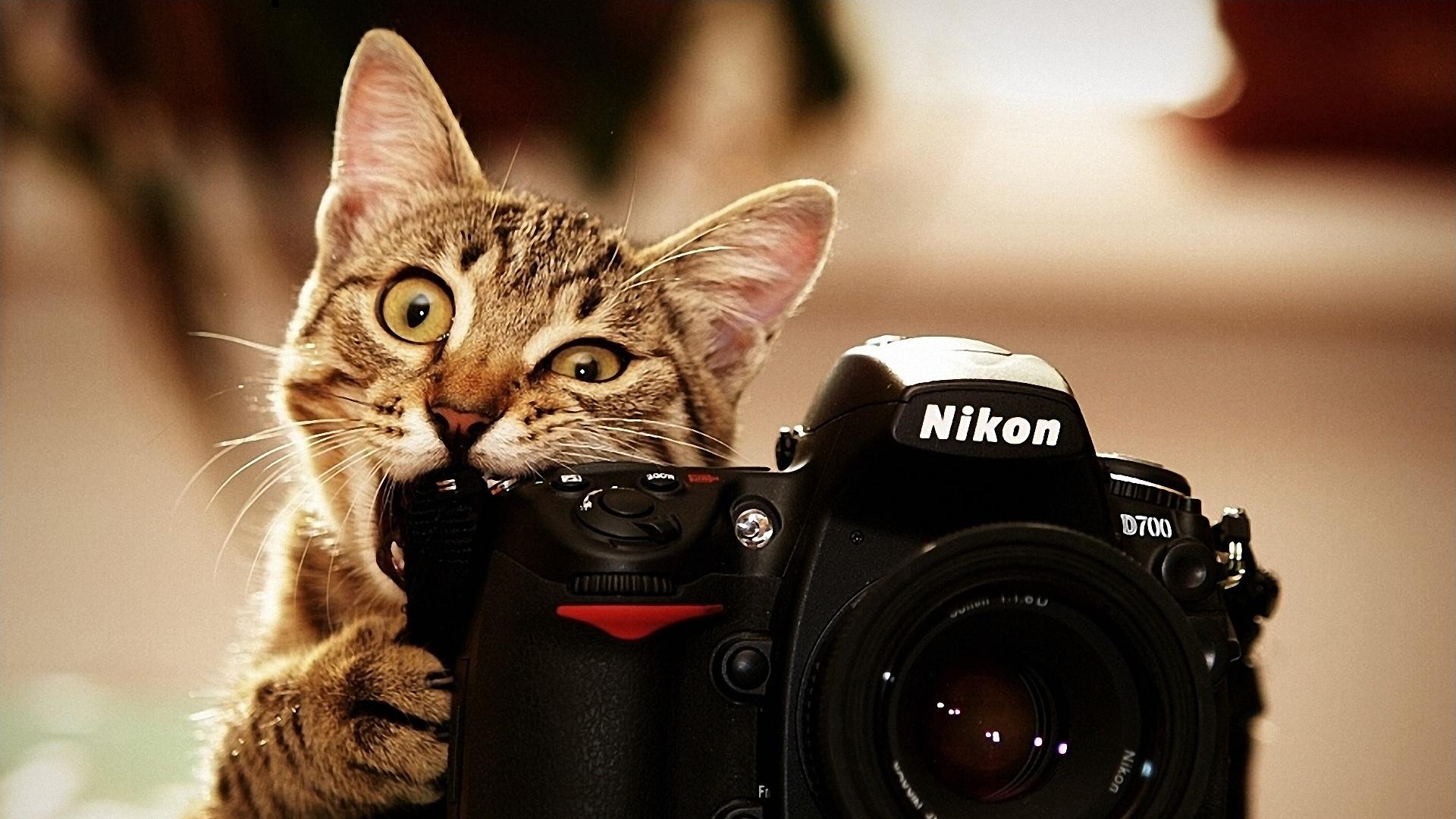 Мъките на фотографа - Коте с Nikon