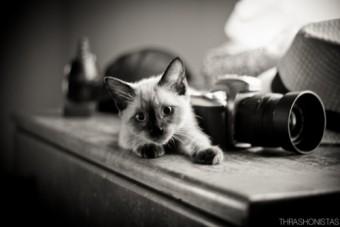 Мъките на фотографа